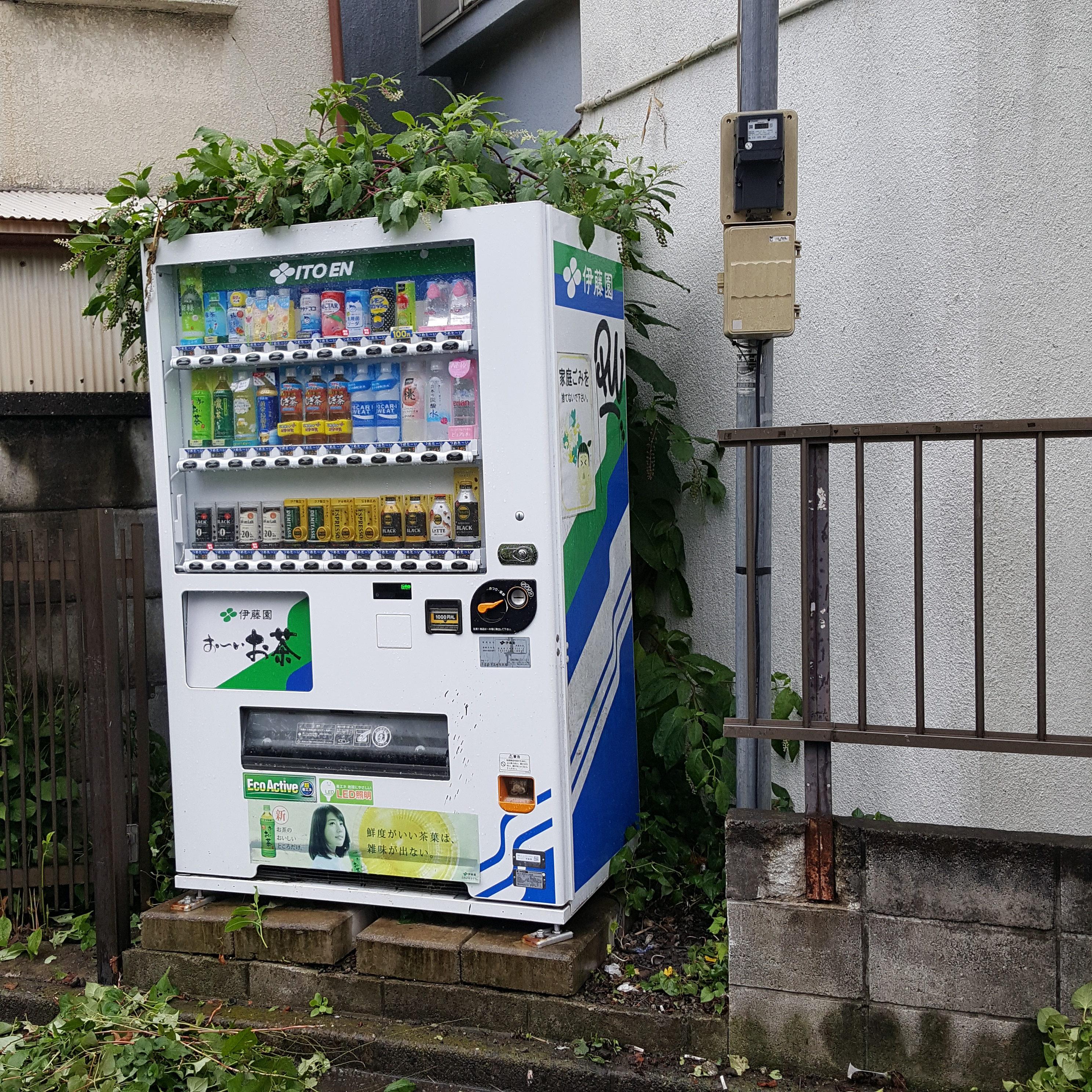横浜市青葉区 木の伐採とお庭の草むしり